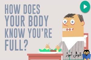 چطور بدن شما می داند که سیر شده اید؟